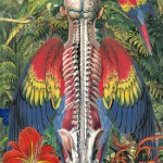 Colorful winged Skeleton. Anatomy of flowers and birds by Madrid based artist Juan Gatti