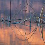 Reflecting Reeds, Kamloops, British Columbia, Canada