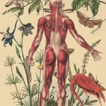 Drawing by Argentinian artist Juan Gatti. Anatomy and plants