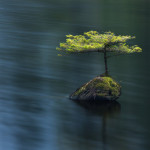 The delightful scene, Fairy Lake near Port Renfrew, fascinating little bonsai conifer growing out of an old mossy stump