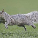 A squirrel can survive even if it jumps from a height of 100 ft. as it has padded feet.
