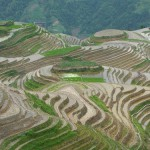 Paradise for photographers – terraced fields