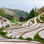 Stripes of terraced fields