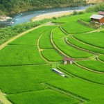 Meanwhile, terraced paddy fields – used widely in rice, wheat and barley farming