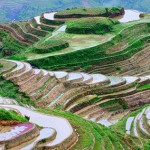 Picturesque rice fields