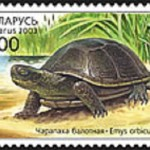 Bog turtle in the Belarusian stamp