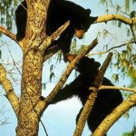 Playing in the trees bears
