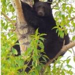 A nice portrait of a bear posing for photographer