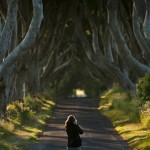Beech Trees alley in Northern Ireland