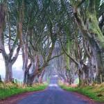 Northern Ireland, Dark hedges avenue of Beech Trees
