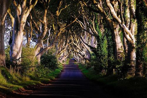 Dark hedges - beautiful old avenue of Beech Trees in Northern Ireland
