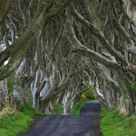 """Called by locals """"Dark hedges"""" – beautiful old avenue of Beech Trees in Northern Ireland"""