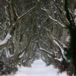 Winter landscape – Dark hedges in Northern Ireland