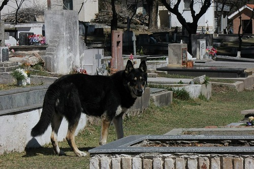 Faithful dog lives at the owners tomb