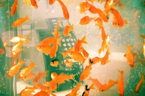 Phone booths turned into aquariums with goldfish