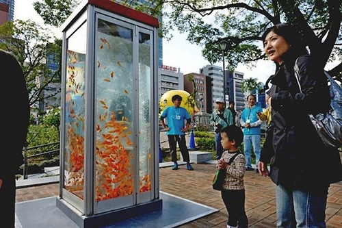 Phone booths turned into aquariums