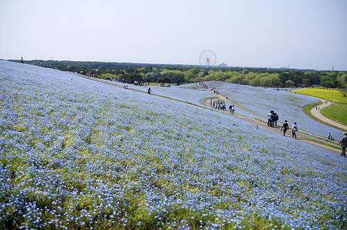 Restored Hitachi Seaside Park