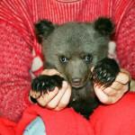 Beautiful Ilzit, the bear