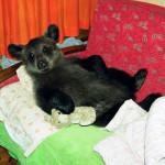Taking a nap on the sofa Ilzit, the bear
