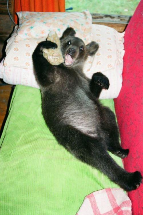 Ilzit, the bear