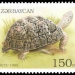 Leopard tortoise in the Azerbaijani stamp