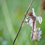 Life of insects in Macro photography by French amateur photographer David Chambon