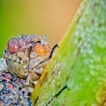 Closeup Macro photography by French amateur photographer David Chambon
