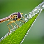 Morning dewdrops and insects by French amateur photographer David Chambon