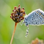 Moth covered with morning dewdrops. Macro photography by French amateur photographer David Chambon