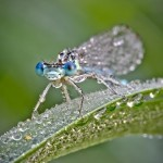 Fly covered with dewdrops. Macro photography by French amateur photographer David Chambon
