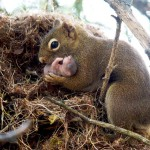 Squirrels hardly move out of their nests in the night. They get back to their nests before it gets dark