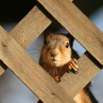 Squirrels interesting facts