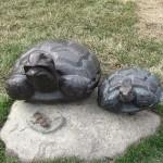 Tortoise in art and heraldy