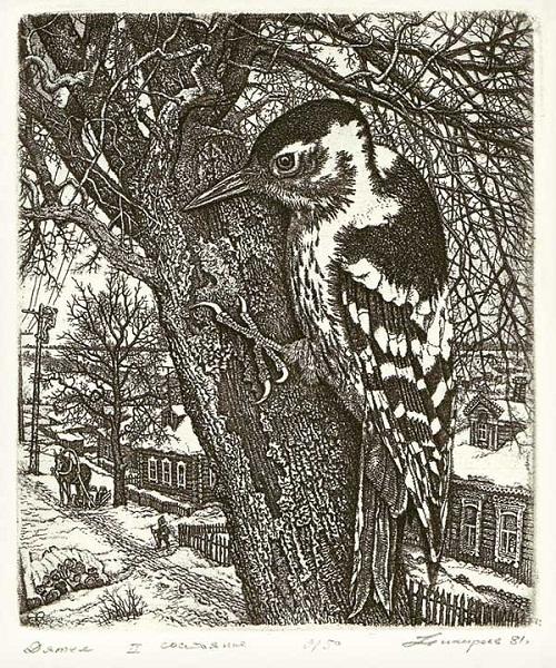 Woodpecker. Etching graphics by Russian artist Stanislav Nikireev