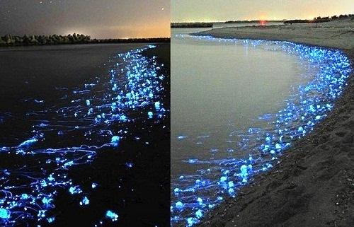 Fabulous view of Toyama Bay luminous jellyfish
