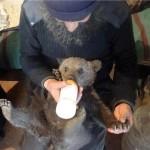 Feeding a cub