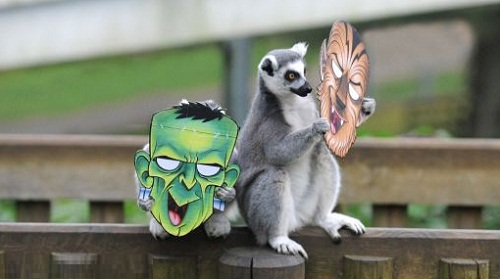 monkeys playing with Halloween masks