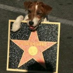 A star on the Hollywood Walk of Fame, Uggie