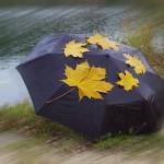 Leaves on umbrella