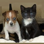 Family portrait of Orphaned puppy Buttons and kitten Kitty who think they're sisters