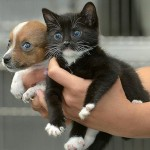 Babies are babies. Orphaned puppy named Buttons and kitten named Kitty think they're sisters