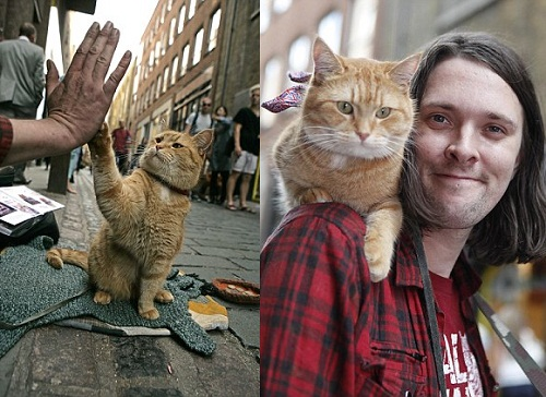 Bob stray cat who saved a man