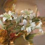 White lily. Painting by Russian artist Evgeny Kuznetsov