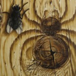 Tree spider and fly. Painting by Romanian artist Mihai Criste