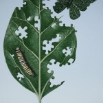 Carved leaf with butterfly and caterpillar.