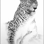 leopard, drawing by Doug Landis