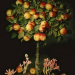 Apple tree with crocuses