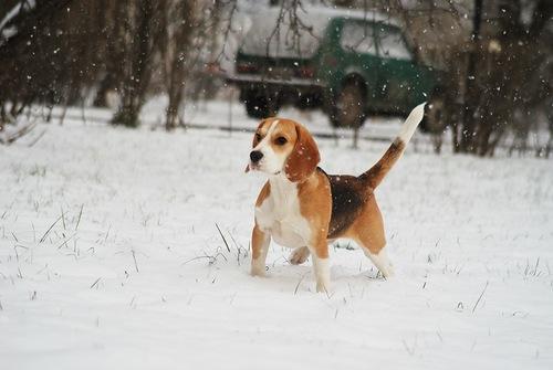Family's favorite pet dog Vintik, Photographer VallDen