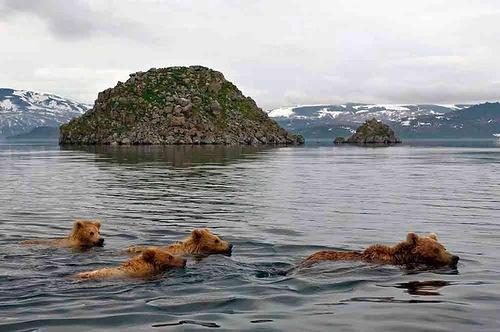 Kamchatka animals by Russian professional wildlife photographer Sergey Gorshkov