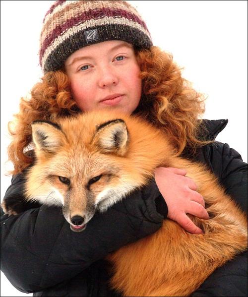 Tamed fox of Irina Mukhamedshina
